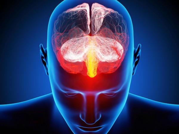 si-brain